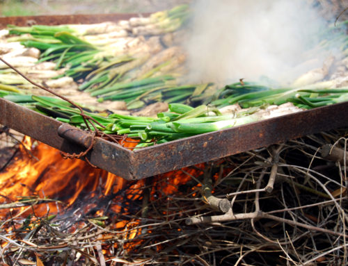 For Erasmus in Catalonia: calçots season!